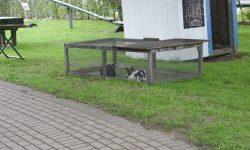kaninchen_stall